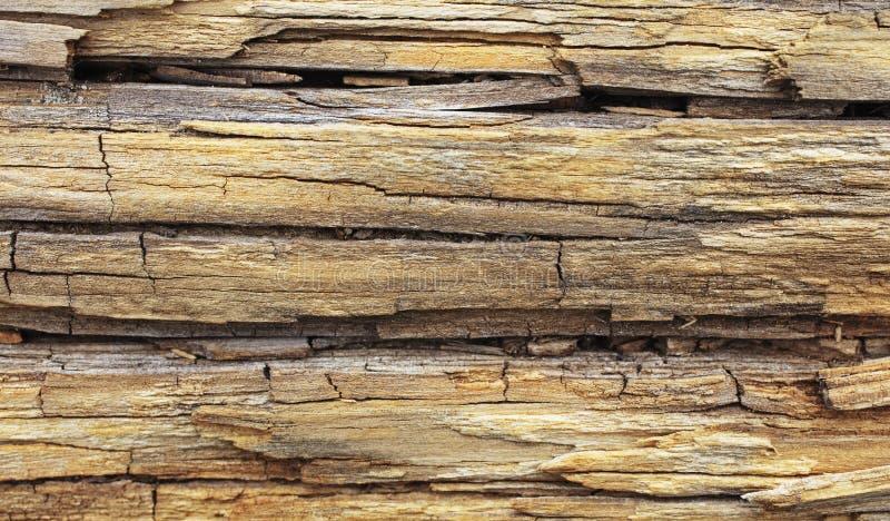 Tronco de madeira velho na praia fotos de stock royalty free