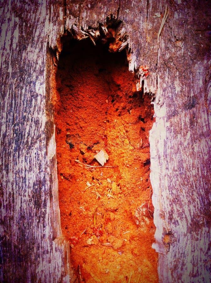 Tronco de madera putrefacto foto de archivo