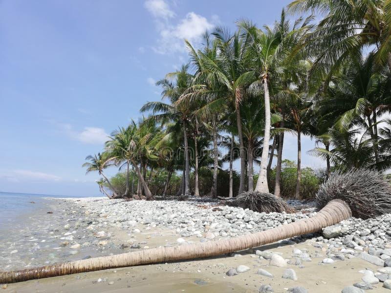 Tronco de palmera caido en la playa arenosa guijarrosa tropical en Mindoro, Filipinas foto de archivo libre de regalías