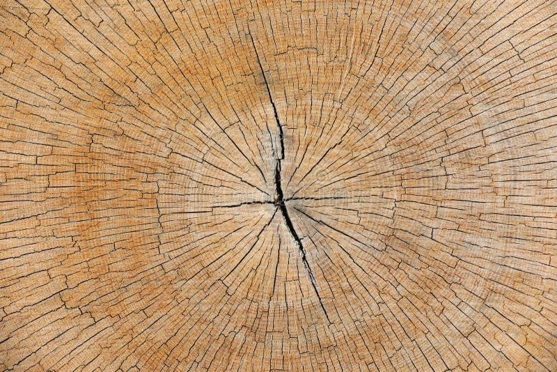 Tronco de ?rbol de madera cortado con los anillos anuales Como fondo fotografía de archivo libre de regalías