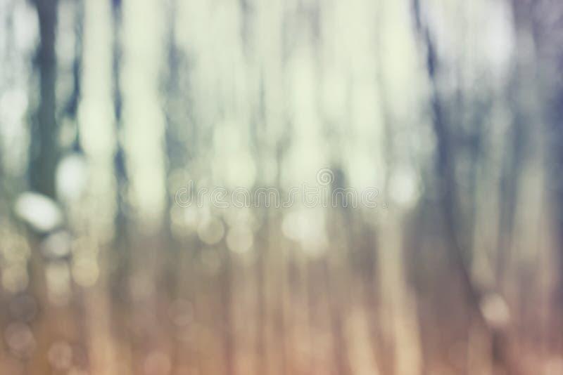 Tronco de uma árvore na floresta mágica fora de foco, fundo abstrato fotos de stock royalty free