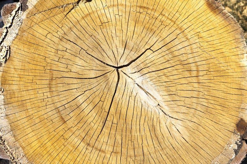 Tronco de uma madeira vista imagem de stock royalty free