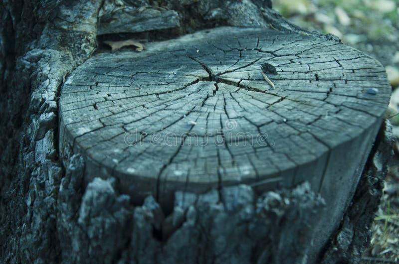 Tronco de un árbol imagen de archivo