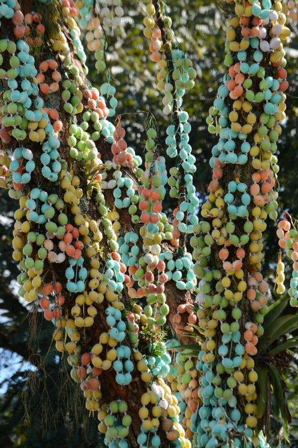 Tronco dell'albero di pasqua coperto fotografia stock