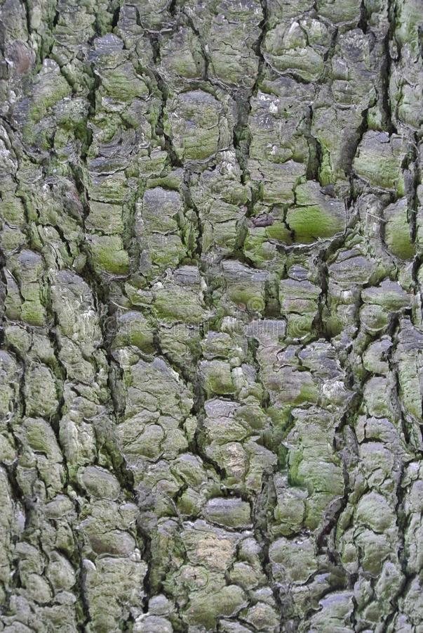 Download Tronco di albero fotografia stock. Immagine di corsa - 55358708