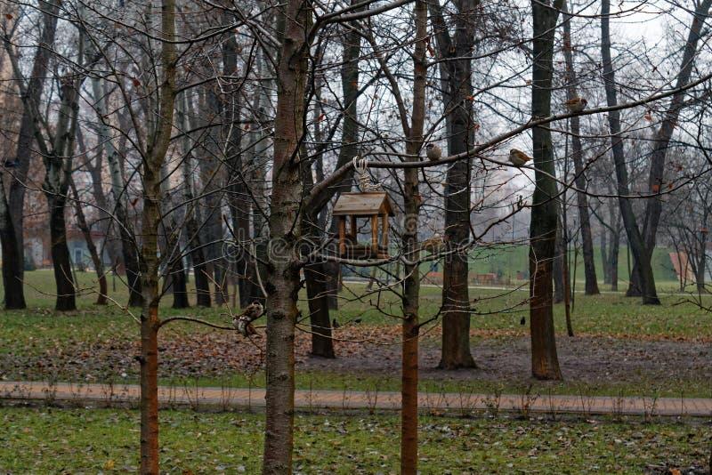 Tronco di albero bagnato spesso dipinto con calcare, fondo del primo piano fotografia stock