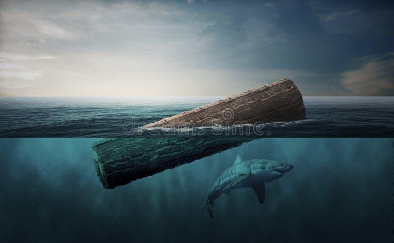 Tronco di albero che galleggia nell'oceano e nello squalo fotografia stock libera da diritti