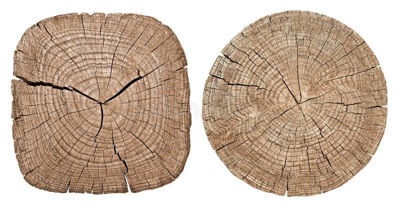 Tronco di albero che mostra gli anelli di crescita immagini stock