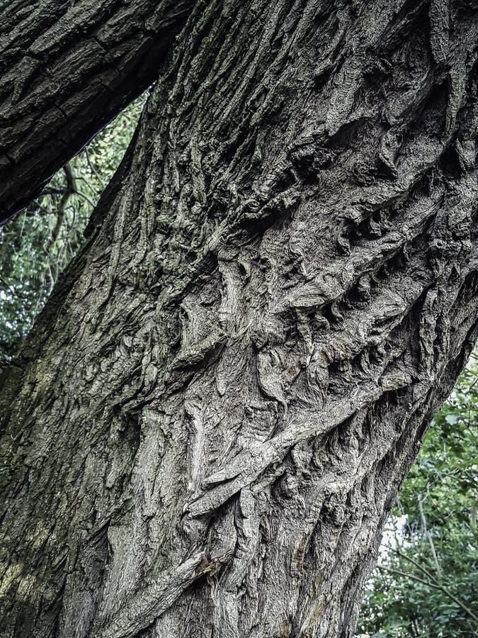 Tronco di albero con i contorni affascinanti fotografia stock
