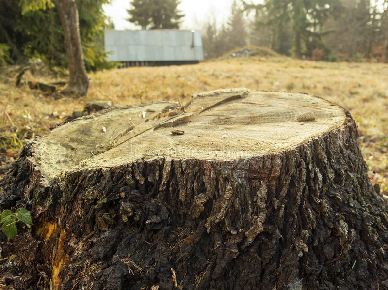 Tronco di albero con il fondo della foresta e della casa immagini stock