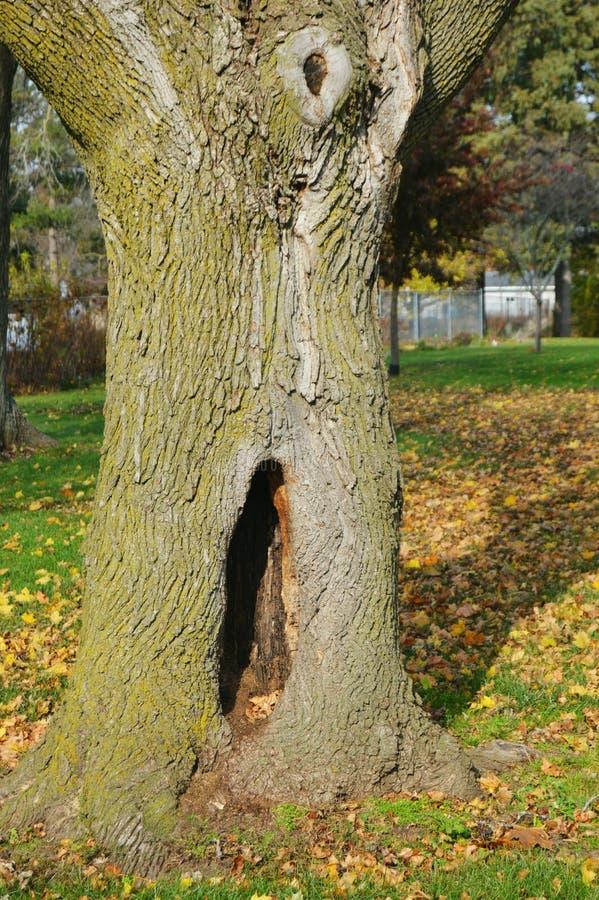 Tronco di albero con il foro immagine stock