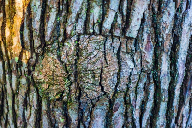 Tronco di albero con la corteccia e un grande nodo circolare immagine stock