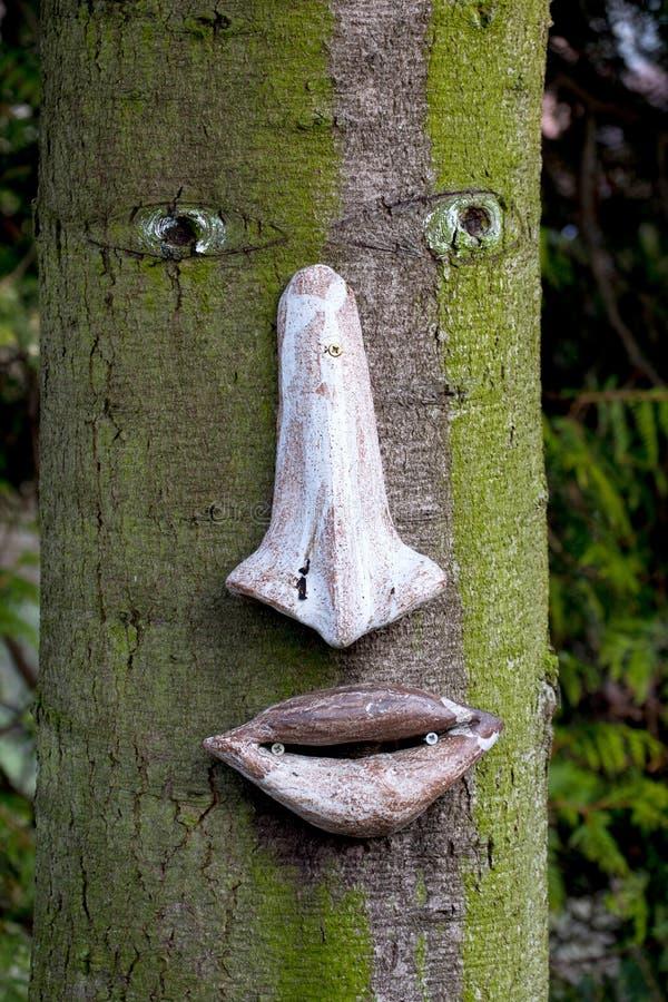 Tronco di albero con un fronte su  fotografia stock