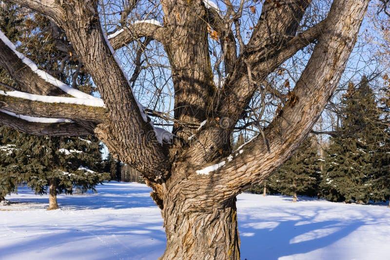 Tronco di albero e rami di albero fotografia stock