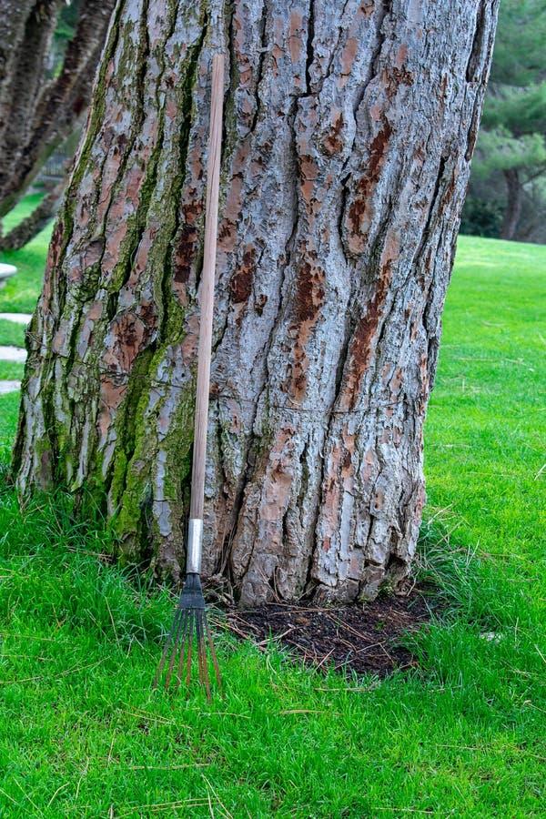 Tronco di albero e strumento di giardinaggio fotografia stock