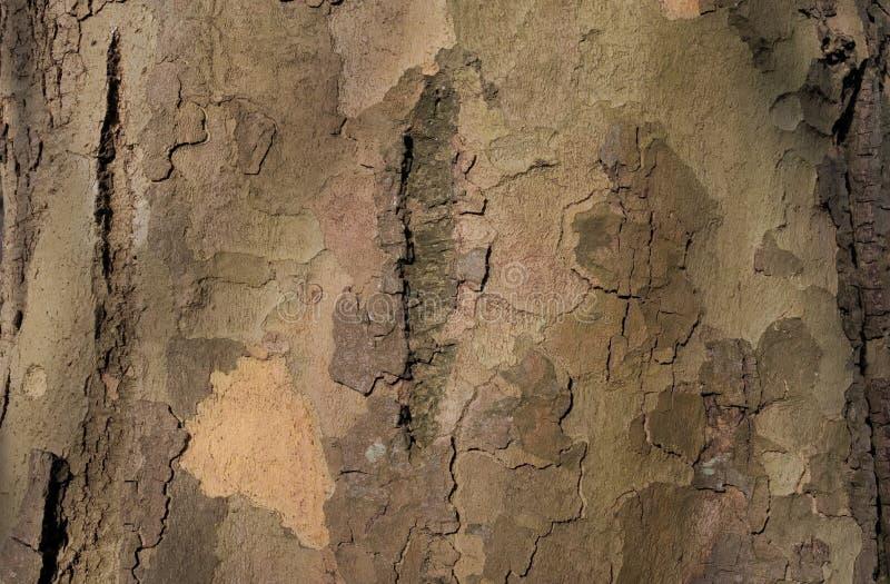 Tronco di albero a fiocchi immagine stock libera da diritti