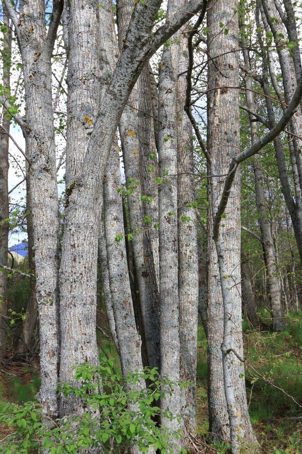 Tronco di albero in foresta fotografia stock libera da diritti