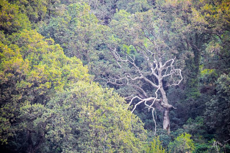 Tronco di albero leggero mistico fotografie stock