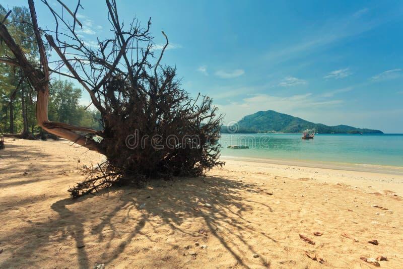 Tronco di albero morto sulla spiaggia immagini stock libere da diritti