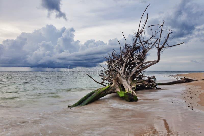 Tronco di albero morto sulla spiaggia fotografia stock