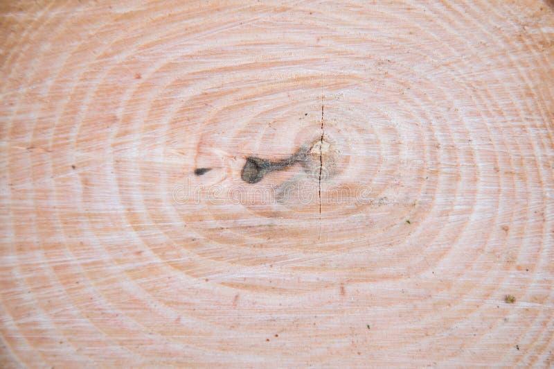 Tronco di albero spesso tagliato Struttura di legno immagine stock