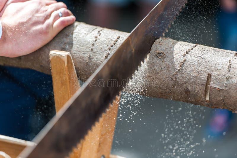 Tronco di albero di taglio dello sposo con la sega immagini stock