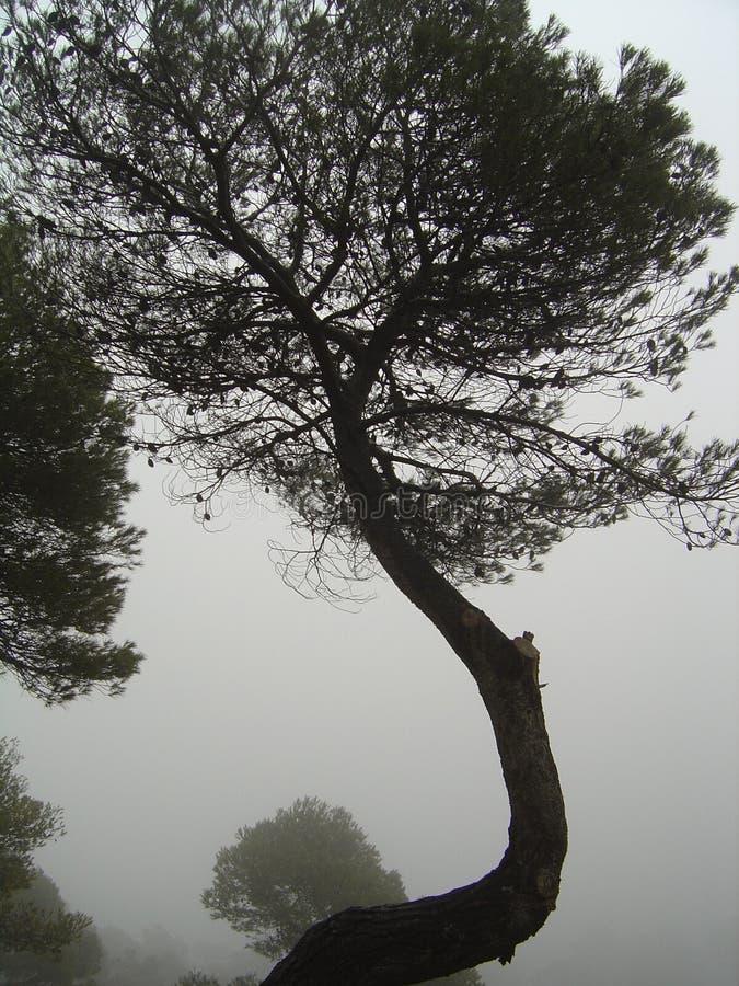 Tronco di albero torto nella nebbia immagini stock libere da diritti