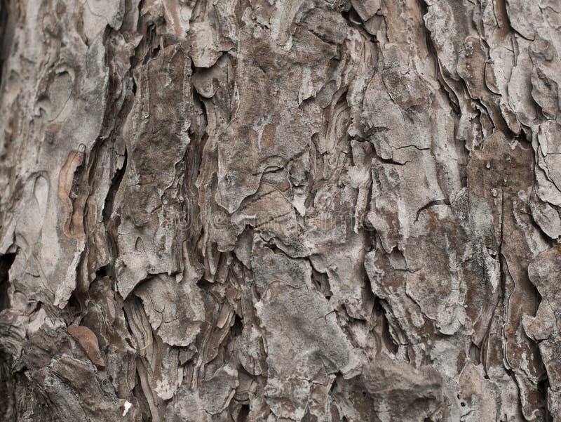 Tronco di legno della corteccia di struttura immagini stock