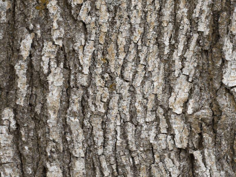 Tronco di legno di struttura fotografie stock