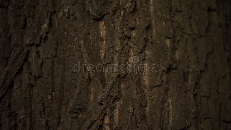 Tronco do fim grande da árvore acima, proteção da natureza e de floresta, cuidado da ecologia, Botânica fotografia de stock