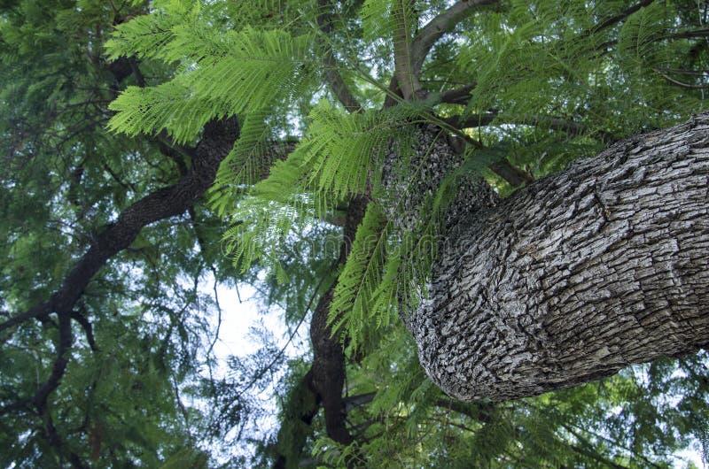 Tronco e ramos de árvore imagens de stock