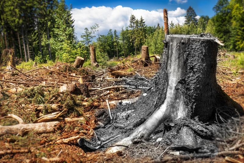 Tronco florestal desmatado fotos de stock royalty free