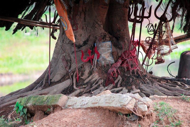 Tronco maciço de árvores dentro do parque fotos de stock royalty free
