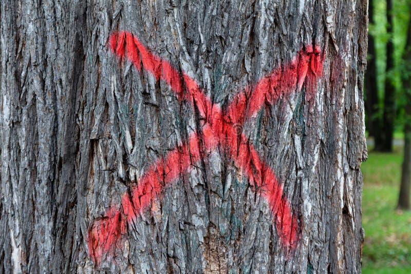 Tronco marcado Sinal de tinta vermelha sob a forma de cruz na casca de uma árvore doente Corte sanitário no parque fotografia de stock