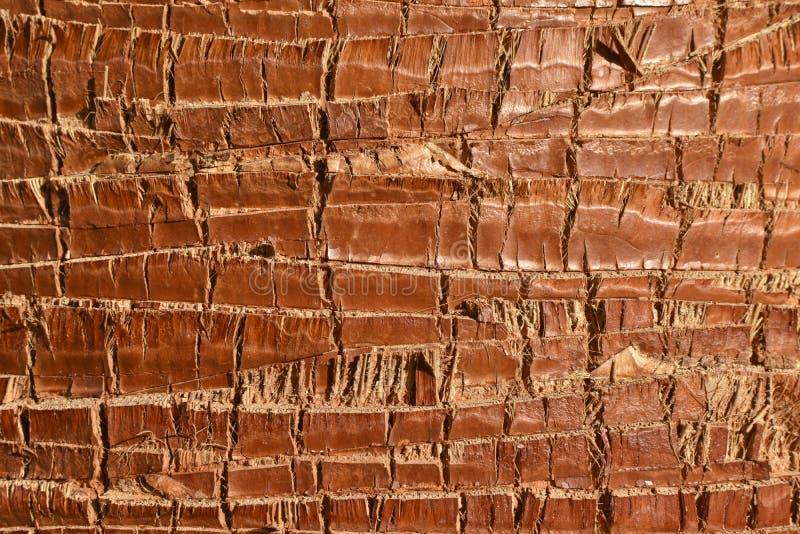 Tronco marrom e cinzento da textura do fundo de palmeira foto de stock