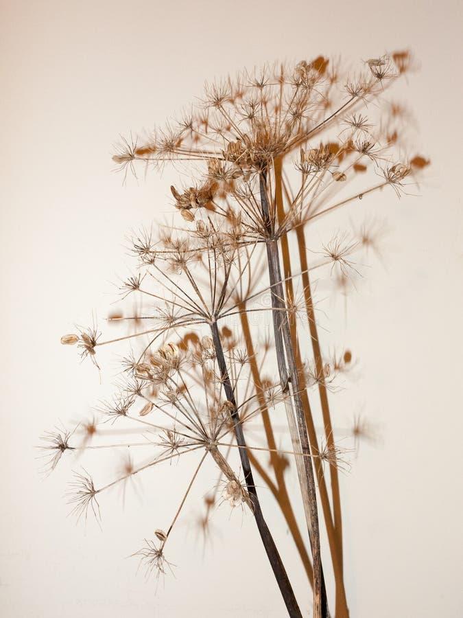 tronco muerto del árbol de la planta en el ornamento blanco de la sombra del fondo bastante imágenes de archivo libres de regalías