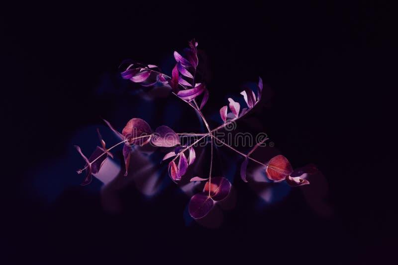 Tronco púrpura rojo de la decoración surrealista de la planta del minimalismo del arte imágenes de archivo libres de regalías
