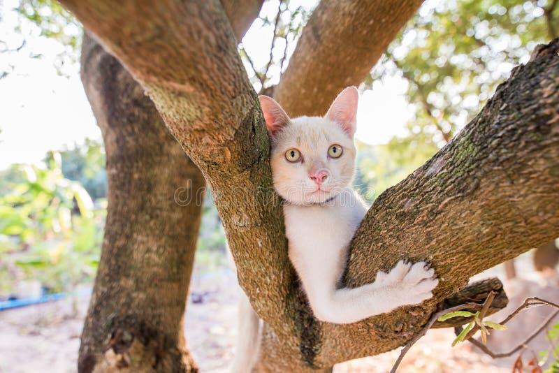 Tronco rampicante del piccolo gatto bianco, giocando su un albero con una bella luce del bokeh ed esaminando un bambino che sta i immagini stock