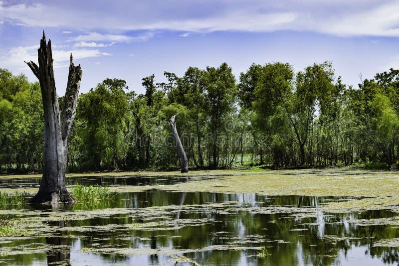 Tronco só no lago elm no parque estadual da curvatura de Brazos fotos de stock royalty free