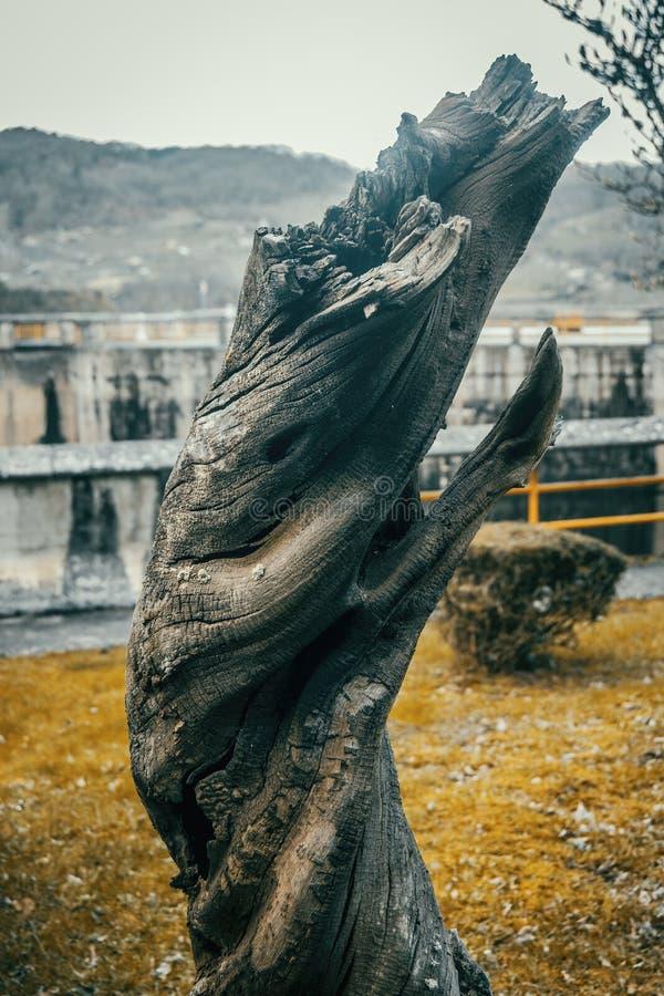 Tronco torcido da madeira velha caída imagem de stock royalty free