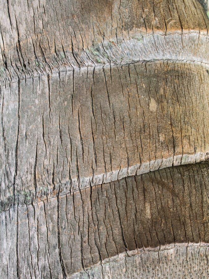 Tronco viejo de la textura del coco imágenes de archivo libres de regalías
