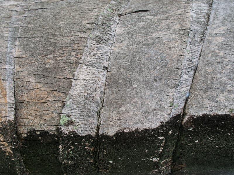Tronco viejo de la textura del coco foto de archivo