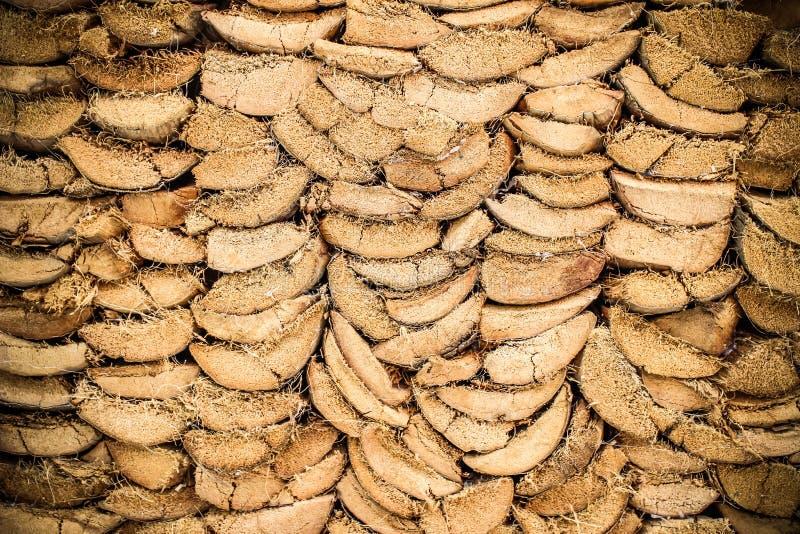 Tronco viejo del fondo del árbol de la cáscara del coco foto de archivo