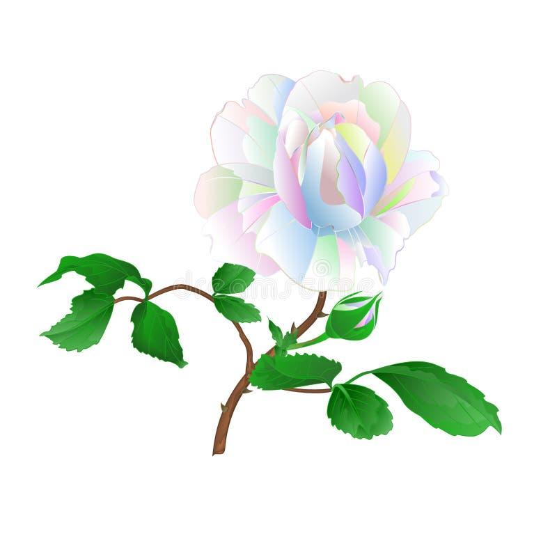 Tronco y hojas de Rose multicolores en un ejemplo botánico del fondo del vector blanco del vintage editable libre illustration