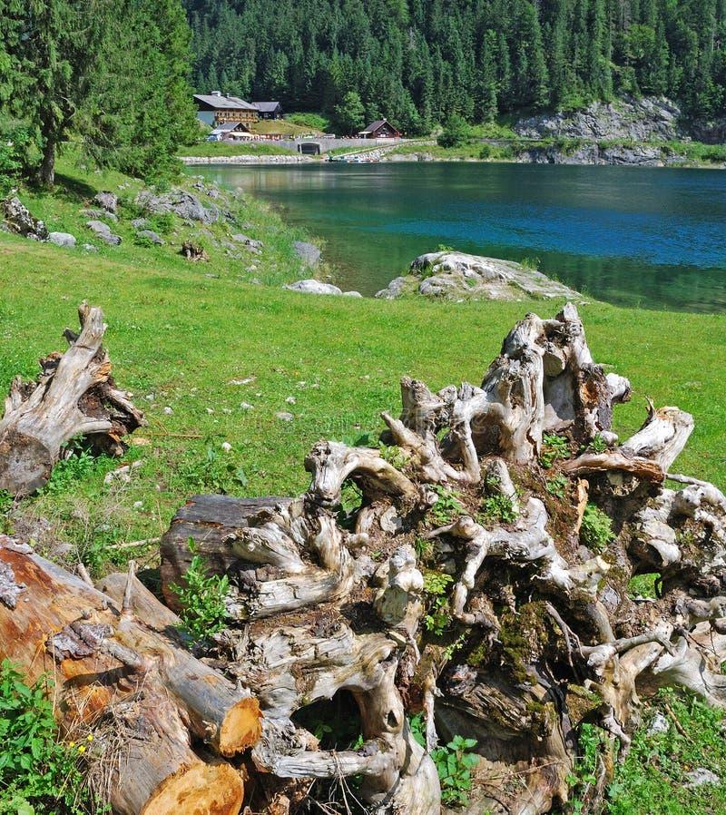 Tronco y lago secos viejos de árbol en Gosau, Austria fotografía de archivo