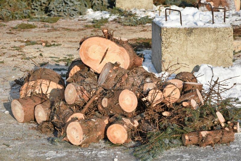 Tronco y ramas de árbol de pino del recorte imagenes de archivo