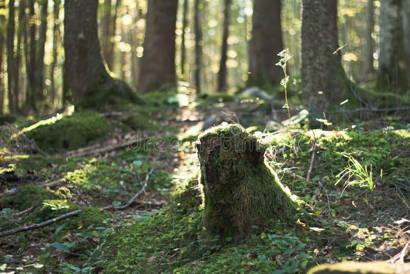 Troncone dell'albero fotografia stock