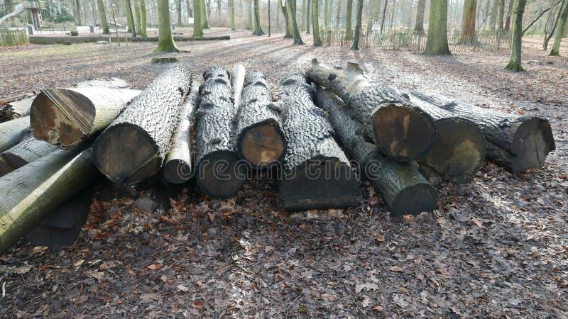 Troncos de árbol imagen de archivo libre de regalías