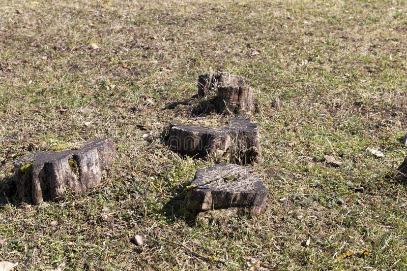 Troncos de árbol foto de archivo libre de regalías