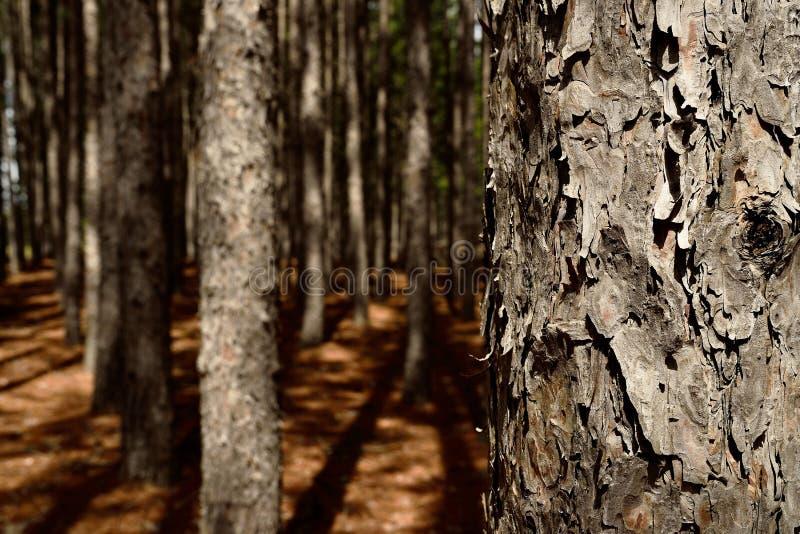 Troncos de árbol fotografía de archivo libre de regalías